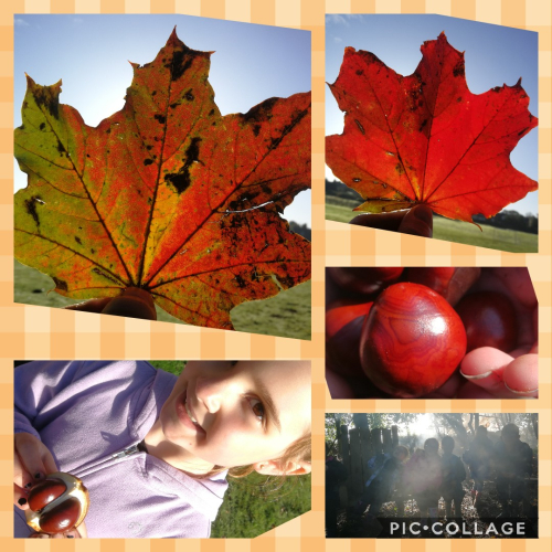 Collage 2019-10-17 11_44_41