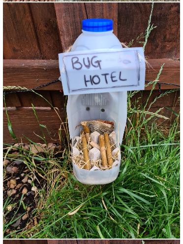 A Gracie bug hotel
