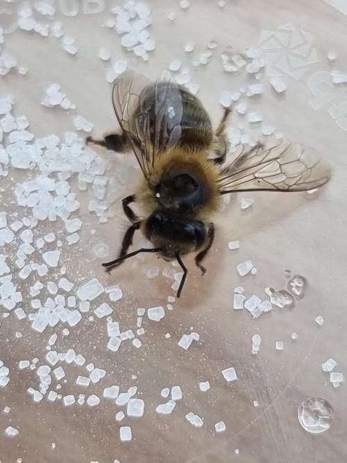 Freddie's Bee